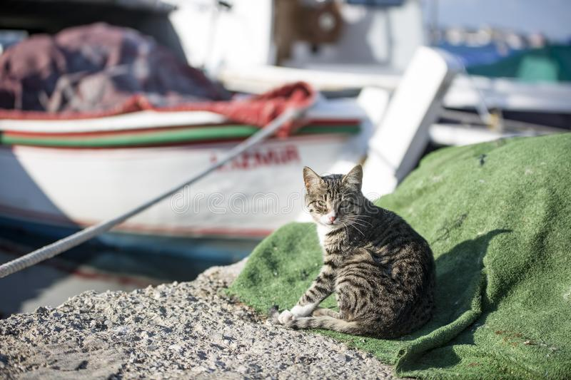 The stray cat. Derelict, forlorn, alone cat outdoor.  royalty free stock image