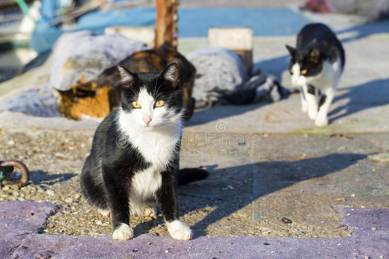 The stray cat. Derelict, forlorn, alone cat outdoor.  royalty free stock photos
