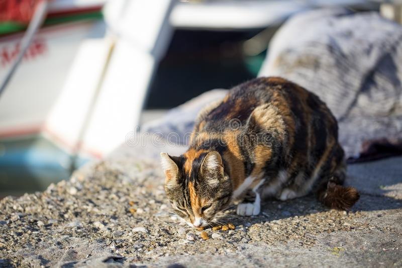 The stray cat. Derelict, forlorn, alone cat outdoor.  stock image