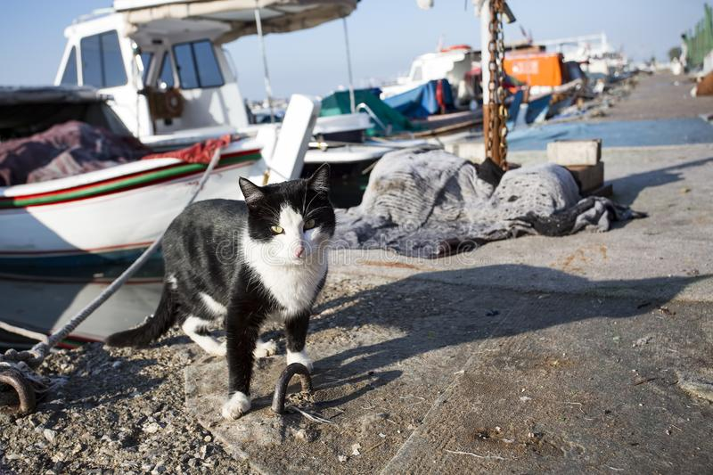 The stray cat. Derelict, forlorn, alone cat outdoor.  royalty free stock images