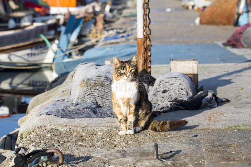 The stray cat. Derelict, forlorn, alone cat outdoor.  royalty free stock photo