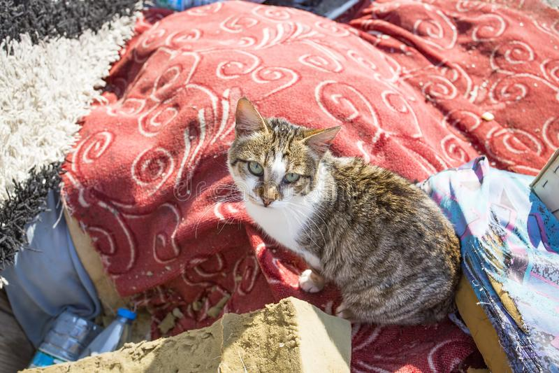 The stray cat. Derelict, forlorn, alone cat outdoor.  stock photo