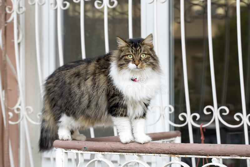 The stray cat. Derelict, forlorn, alone cat outdoor.  royalty free stock photography