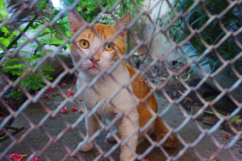 A stray cat. In the fence royalty free stock photo