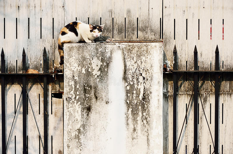 Stray cat with grungy wall stock images