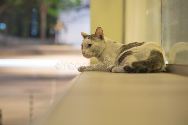A stray cat at the night scene. A stray cat feel afraid and be careful while sitting and look at shooting from camera in the night time at city, selective focus stock images