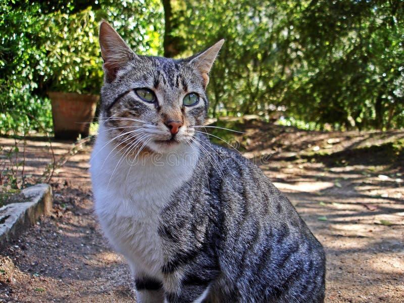 Stray cat op zoek naar eten in een park stock afbeeldingen