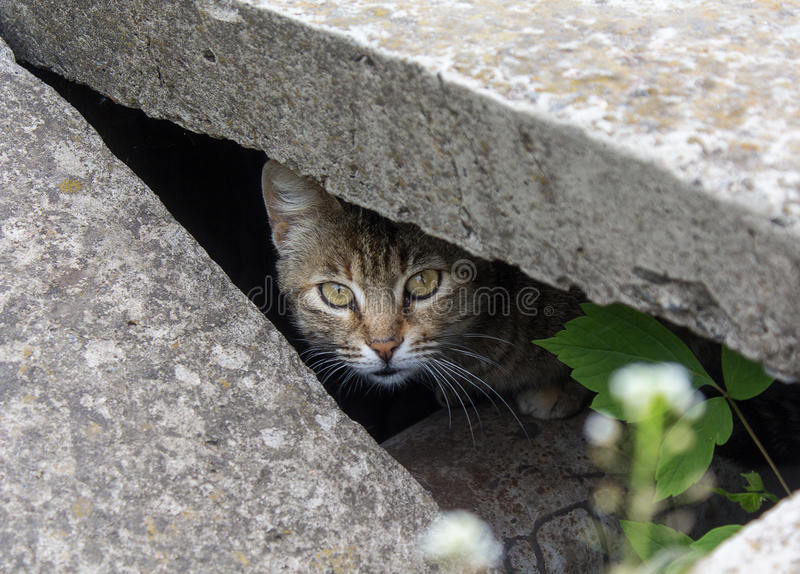 Stray cat peeking from the slit. Pets stock photos