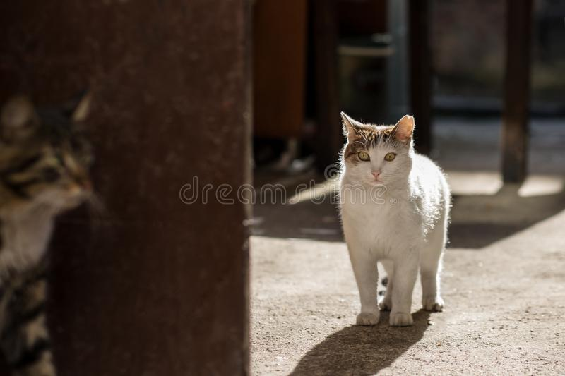 2019 Stray Cat Photographer new photo, two cute street cats hidding game stock photography