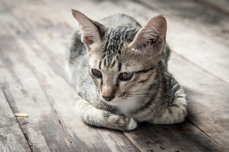 Stray cat portrait post on the wooden stock images