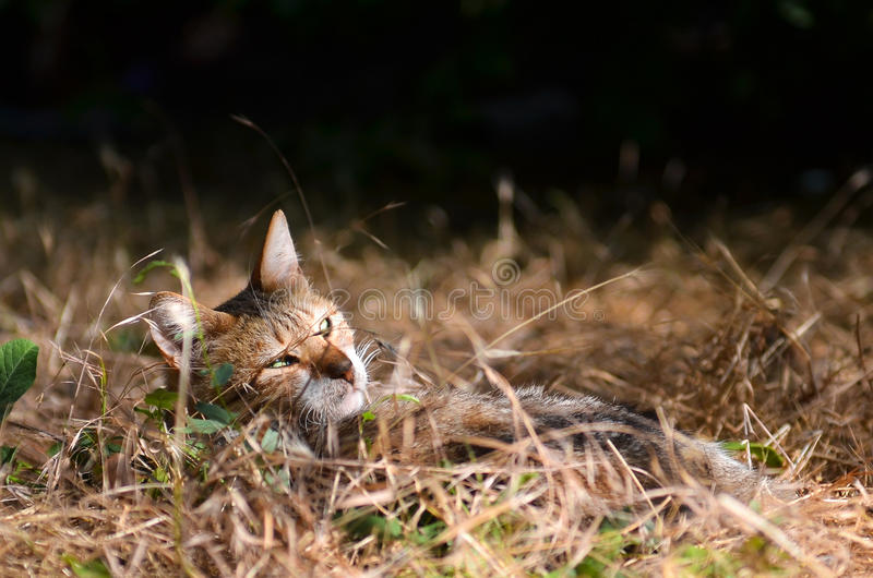 Stray cat rests in meadow stock photo