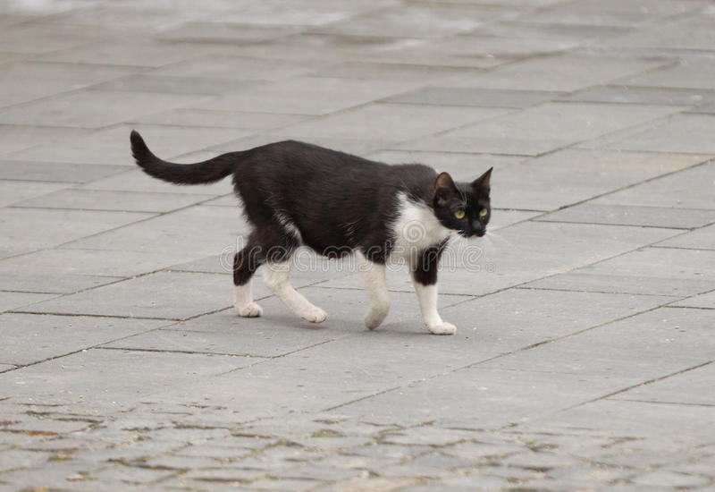 Stray cat. Roaming the streets stock photos