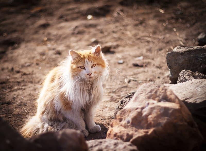 Stray cat. stock photo