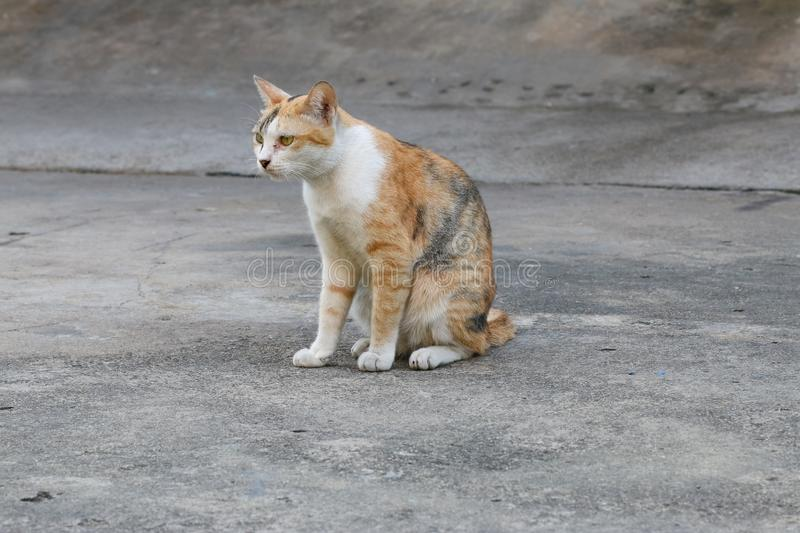 The stray cat sitting on the road surface. Cat homeless animal sitting on the road floor stock images