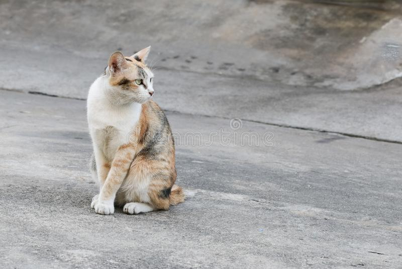 The stray cat sitting on the road surface. Cat homeless animal sitting on the road floor stock photography