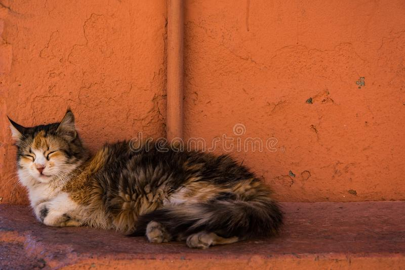 Stray cat sleep beside red wall in Morocco. Stray cat sleep beside .red wall in Morocco royalty free stock image
