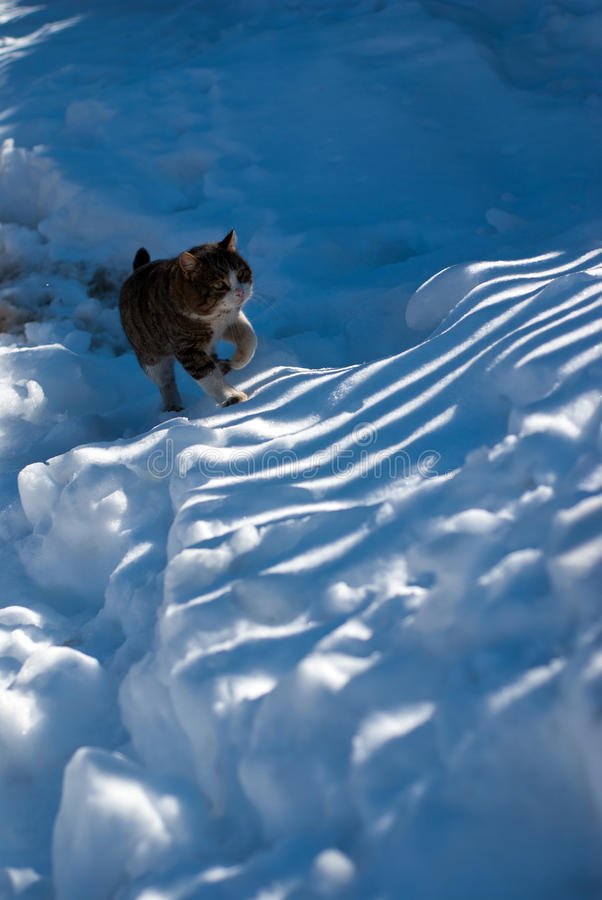 Download Stray cat in the snow stock image. Image of playing, adorable - 33382549