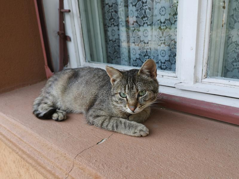 Stray cat. Resting near a window stock images