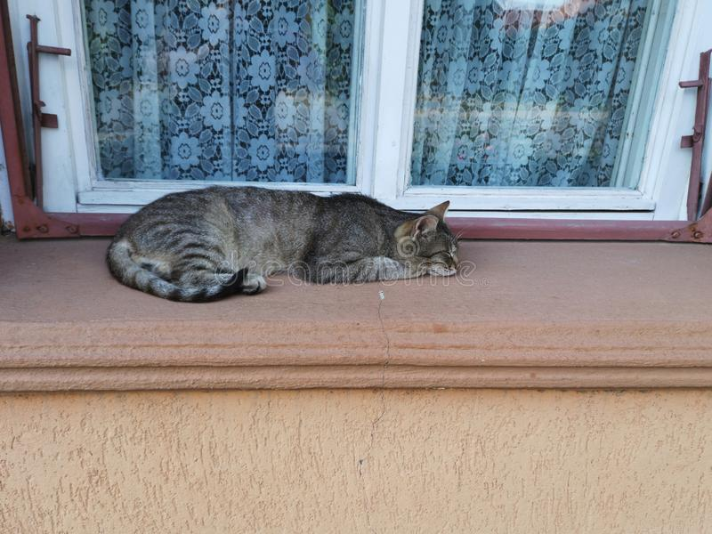 Stray cat. Resting near a window royalty free stock images