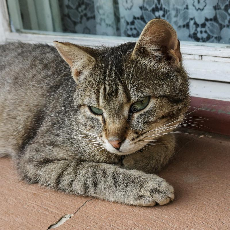 Stray cat. Resting near a window stock photography