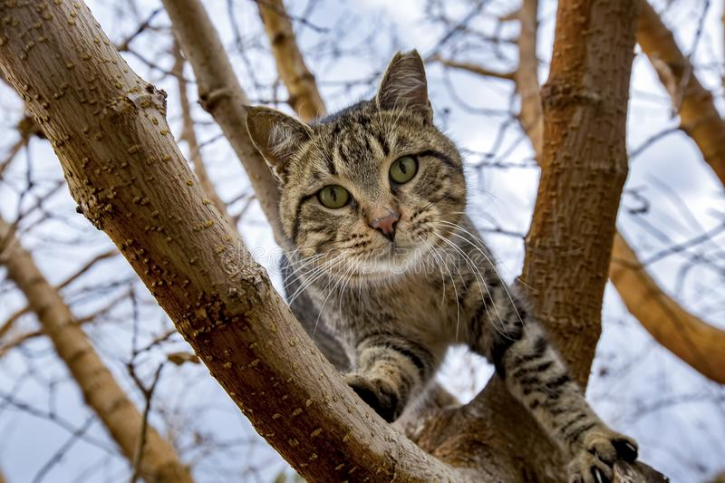 Animal; stray cat. The stray cat in street, alone and unattended stock image