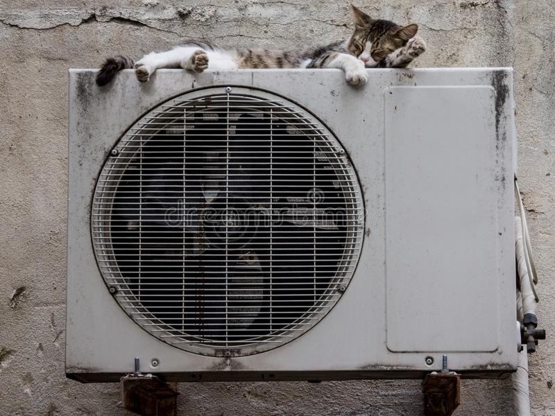 Stray cat in a street sleeping on the condenser unit of an AC air conditioning system royalty free stock photo