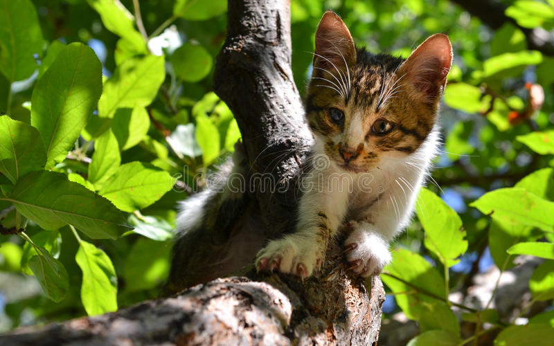 Stray cat on the tree. With desperate look royalty free stock photo