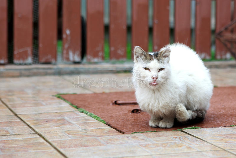 Stray cat. A stray cat under the rain in Romania royalty free stock photography