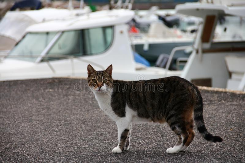 Stray cat. Walking in the port stock images
