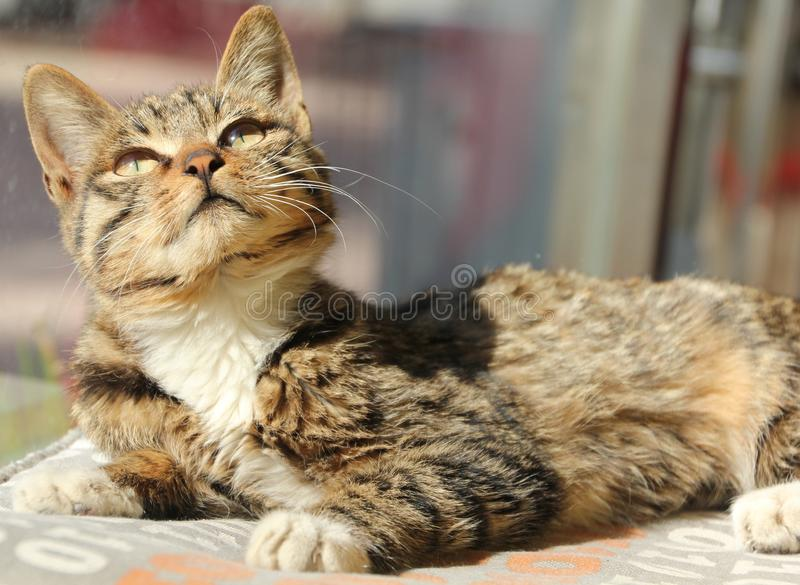 stray cat watching sky royalty free stock images