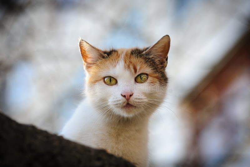 Stray cat royalty free stock image