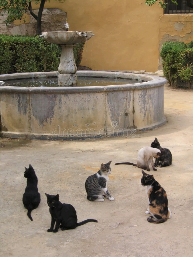 Free Stray Cats And A Fountain Stock Image - 567871