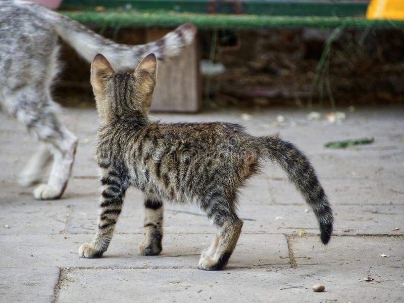 Stray cats. Little stray cat in refuge for cats stock photo