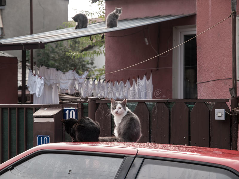 Stray Cats Macedonia. Four stray cats on roof of car and house in Skopje, Macedonia, Europe stock photos