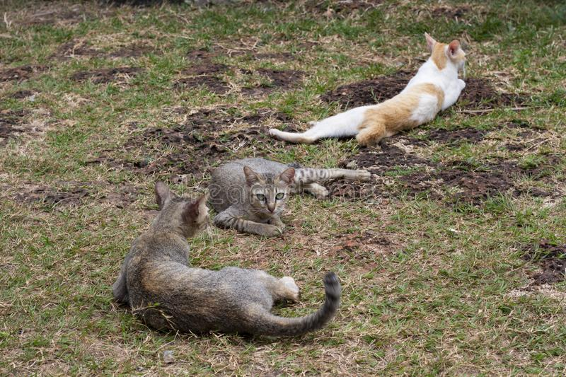 Stray cats relax and play on green grass. Homeless cat family on summer lawn. Green-eyed brown cat look to camera. Kittens on grass. Summer outdoor kitty royalty free stock images