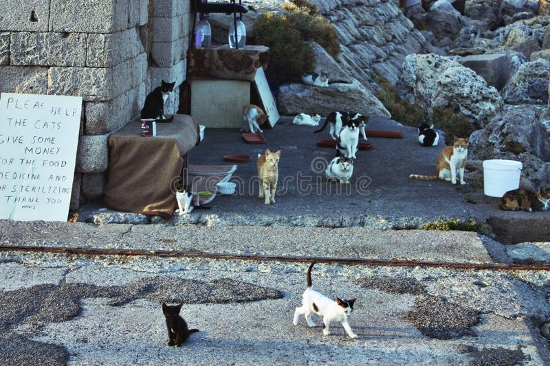 13 stray cats on the street of Rhodes Island stock image