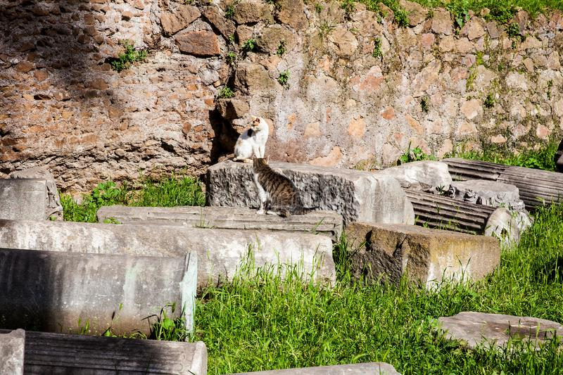 Stray cats sunbathing on top of the ruins of Roman columns at the Piazza Vittorio Emanuele II in Rome royalty free stock photo