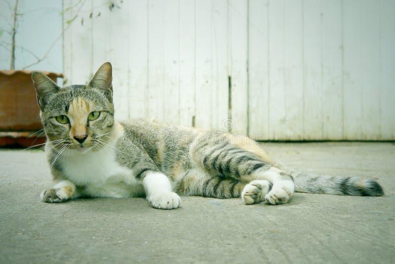 Stray cats stock image