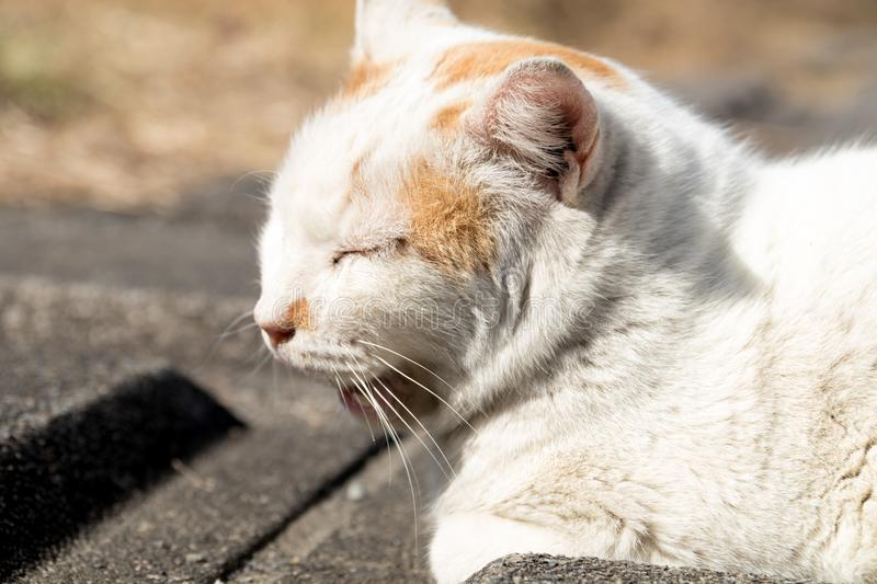 Stray cats are very cute stock photo image of feline 112390392 download stray cats are very cute stock photo image of feline 112390392 voltagebd Gallery