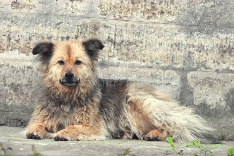 stray del cane fotografia stock