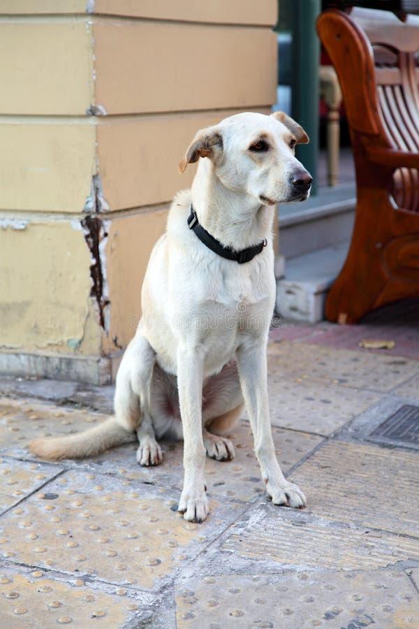 Download Stray dog stock photo. Image of urban, sadness, waiting - 13131886