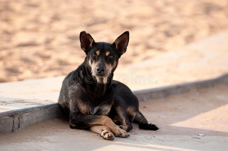 Download Stray Dog stock photo. Image of abandoned, little, neglect - 16874906