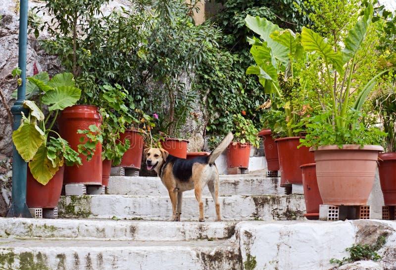 Stray Dog Royalty Free Stock Image