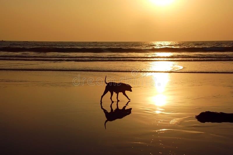 Stray Dog On The Beach stock photo