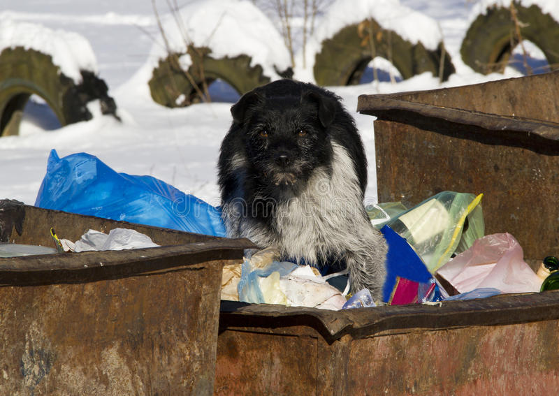 Download Stray dog stock image. Image of dogs, dirty, abandoned - 30405205