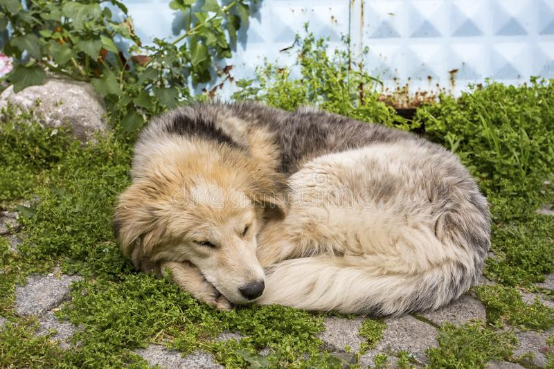 Stray dog. Derelict, forlorn, alone dog outdoor.  royalty free stock photography