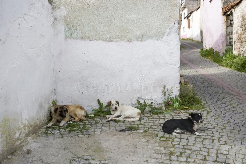 Stray dog. Derelict, forlorn, alone dog outdoor.  stock photography