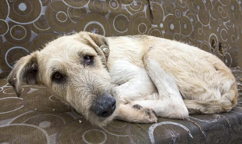 Stray dog. Derelict, forlorn, alone dog outdoor.  royalty free stock photos