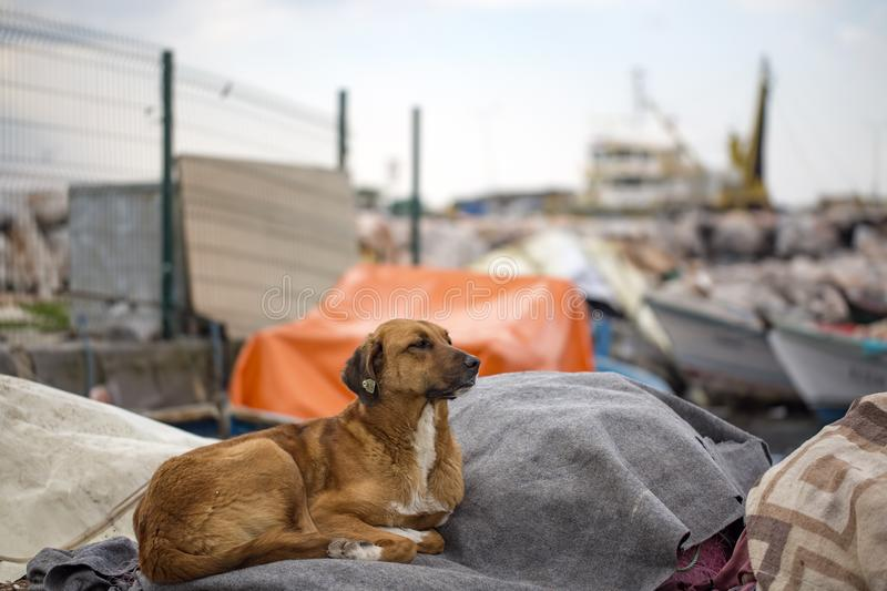 Stray dog. Derelict, forlorn, alone dog outdoor.  royalty free stock images