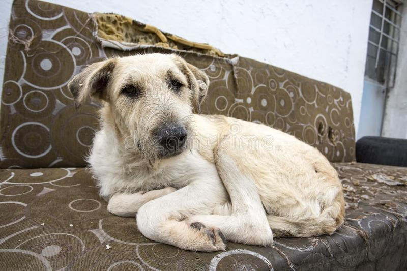 Stray dog. Derelict, forlorn, alone dog outdoor.  stock images